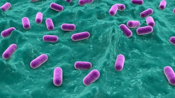 probiotics help eczema